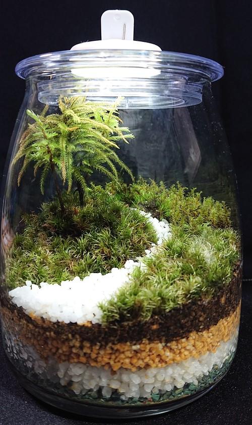 苔ボトル Kokebottle Moss bottle ライト付きセット 012