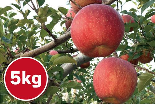 縄文農法™のリンゴ【5kg詰 / 14〜20個 / サンふじ / 家庭用(キズあり)】
