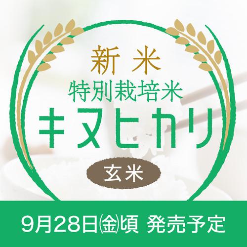 新米・特別栽培米 キヌヒカリ 玄米30kg〈1週間以内で発送〉