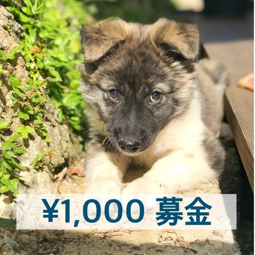 ¥1,000募金