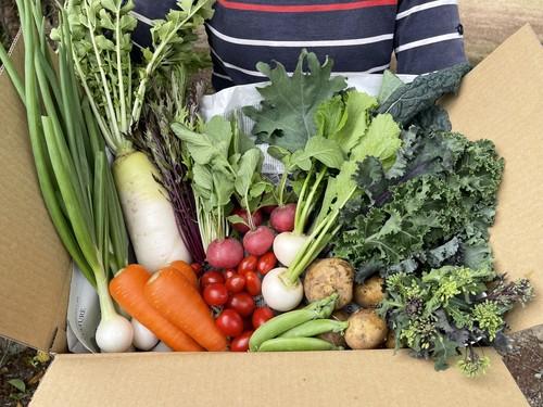 季節の野菜セット 5ヶ月間の定期便