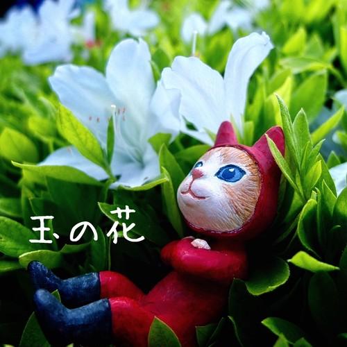 玉木慎吾CD 「玉の花」