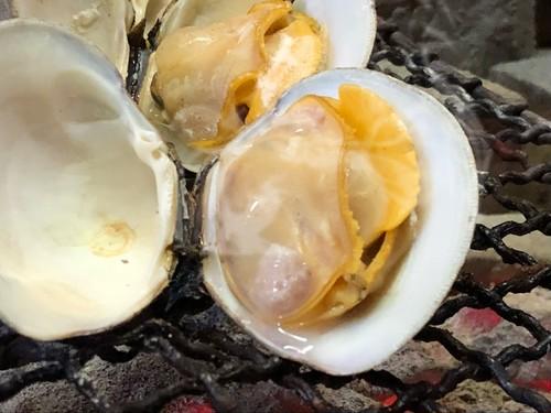 【活】白ハマグリ 大 (ホンビノス貝)
