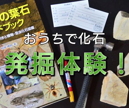 化石発掘セット(ガイドブックなし)