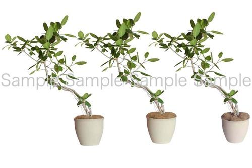 植栽24_画像
