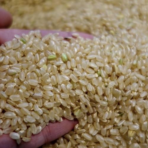 無農薬、無化学肥料のお米(2kg)【宅急便コンパクト発送】