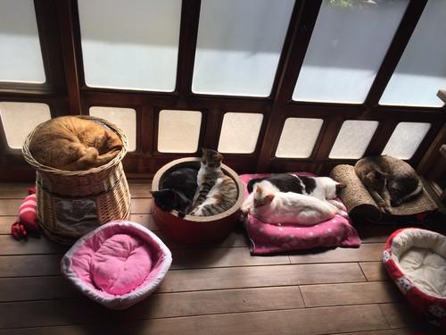 【毎月】保護猫たちへ生活費の支援