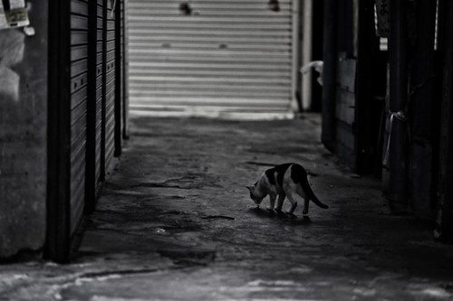 A4プリントSTREET CATS 00003