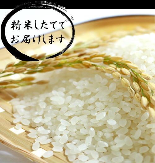 塩沢産 コシヒカリ 10kg