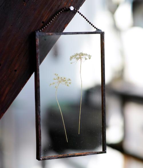 植物絵画:押し花『レースフラワー』a