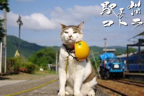 絵はがき【現場行くぞの駅長猫】