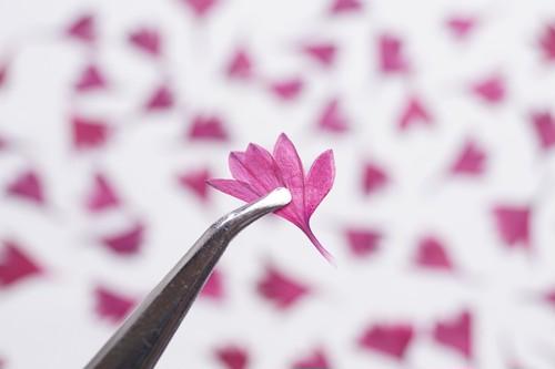 DRY EDIBLE FLOWER[ 矢車草・赤紫 ]