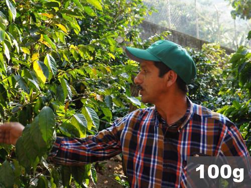 グァテマラ | エスペランサ農園 ラ・ベガ ウォッシュド | コーヒー豆100g