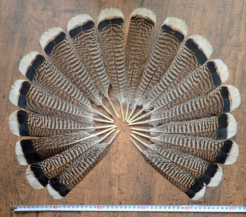 Turky Tail 18pcs. (WhiteTip / Brown) 6-7inch/16-18cm