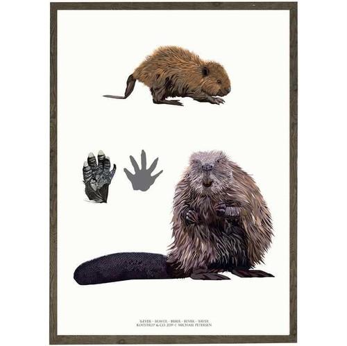 アート ポスター A4 サイズ KOUSTRUP & CO. - Beaver ビーバー