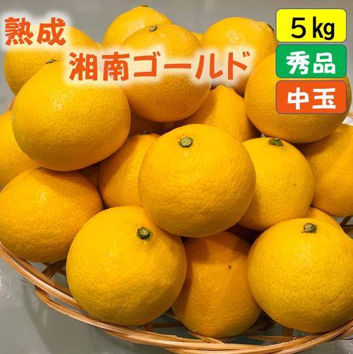 送料無料 熟成・湘南ゴールド(秀品)5kg