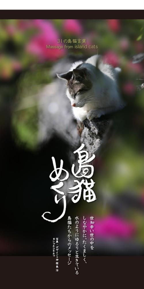 万年日めくり「島猫めくり」31の島猫言葉〜沖縄の島猫たちからのメッセージ