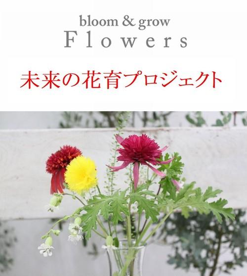 中央区「Flowers」未来の花育プロジェクト初回セット