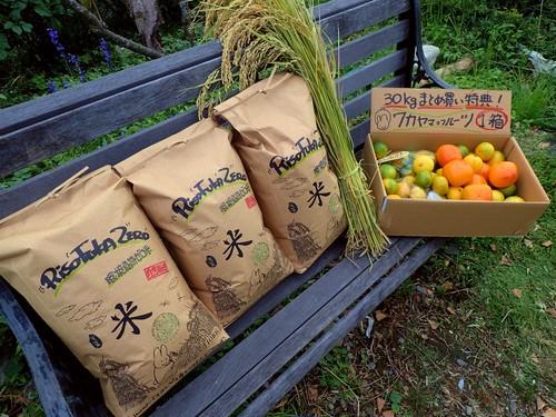 自然栽培米★30キロ★特典「ワカヤマ・フルーツ」一箱付き!一番お得。