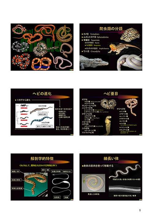 プライベートセミナー:爬虫類の臨床:ヘビ(ハンドアウト)