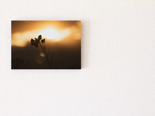 【A4サイズ相当】パネル写真:菜の花②