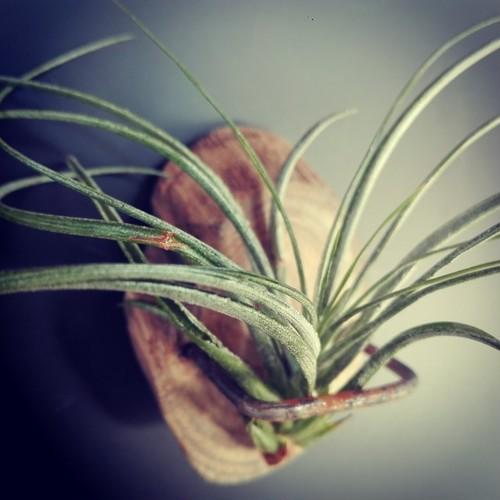植物シリーズ プランツハンガー 磁石付き 高知産 作品No.PH5
