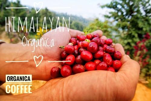 ヒマラヤンオーガニカ(ネパール)中煎り 無農薬無化学肥料