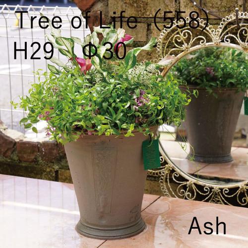 英国製JPGS限定色ウィッチフォード鉢【Tree of Life】