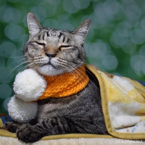 猫専用マフラー:みゃふら~(手編み:オレンジ色&白色ボンボン)