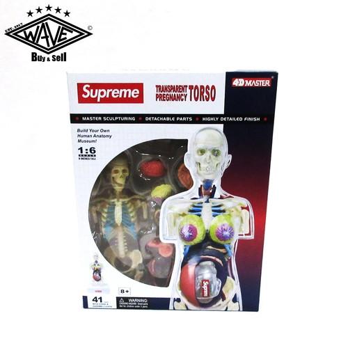 SUPREME 18AW Female Anatomy Model
