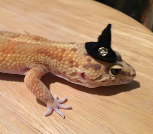 ハロウィンの魔女帽子