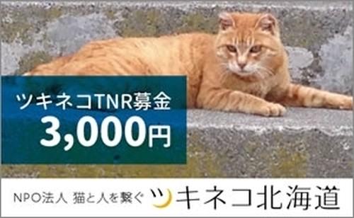 TNRプロジェクト 募金<3,000円>