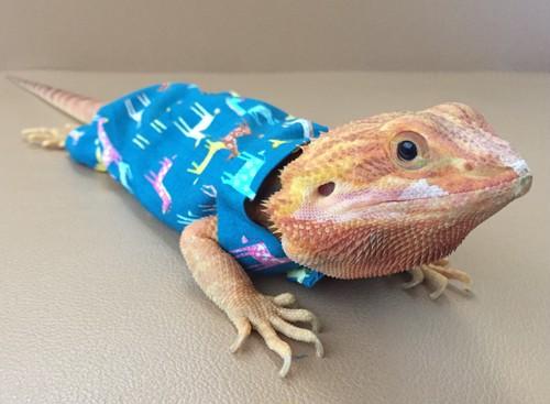 緑色のキリンのパジャマ M