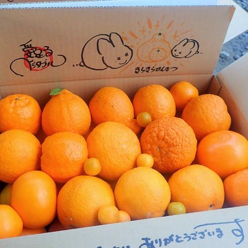 ワカヤマフルーツ★キラキラ柑橘★柑橘10種位★デコポンがん詰め+セトカ+ポンカン他★