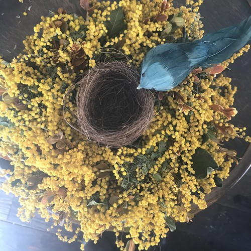 Dried  mimosa & red leaves of boxwood wreath   ( with Nest & bird) /(ドライミモザと紅葉ツゲのリース / 小鳥と巣付き)