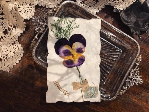 【GPF-031】antique card /display goods