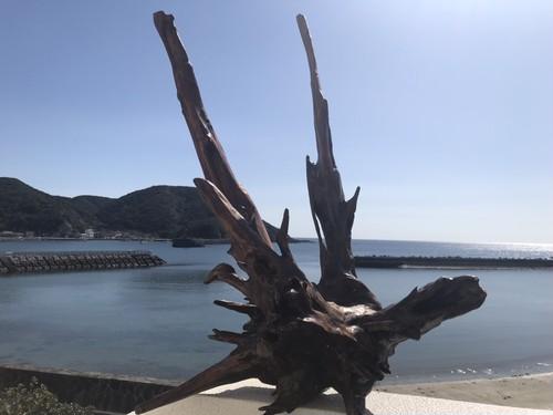 【限定1品】流木インテリア オブジェ龍
