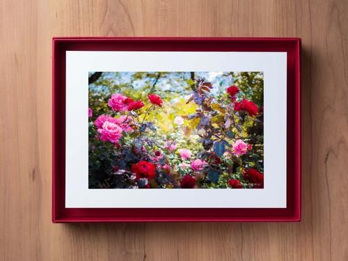 PhotoSketch&BOXSCAPE -Rose04-