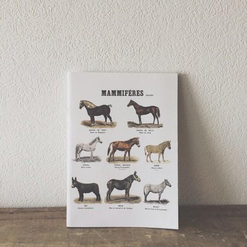 Deyrolle ノート / MAMMIFÉRES