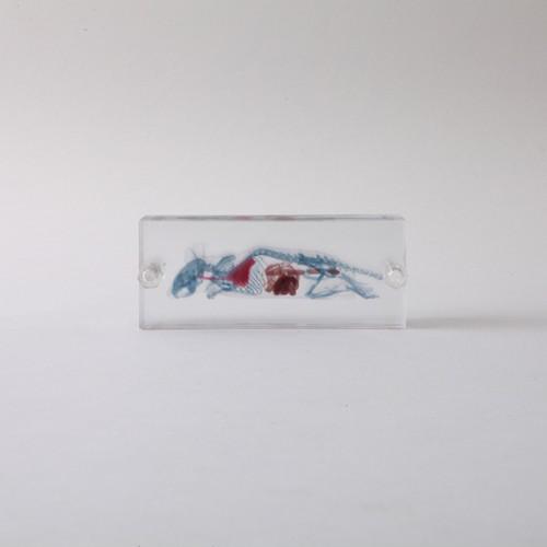 3D積層フィギュア マウス ネジ 3Dデータ収録USBメモリ付 A01