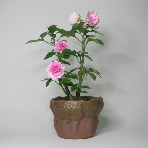 ミニ鉢カバー 陶器(信楽焼)製【SO-9519】