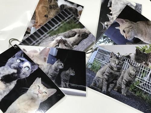 豊田市のさくらねこポストカード8枚セット【送料無料】