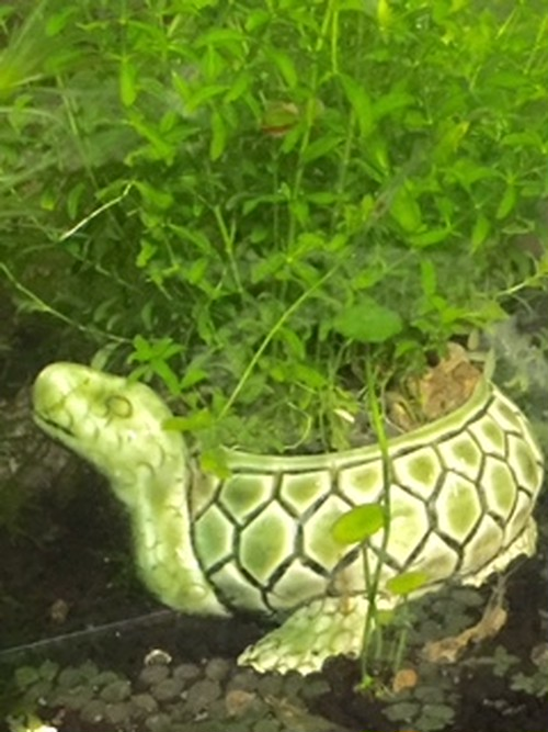 Z11 カメ水草鉢  (穴なし 緑)