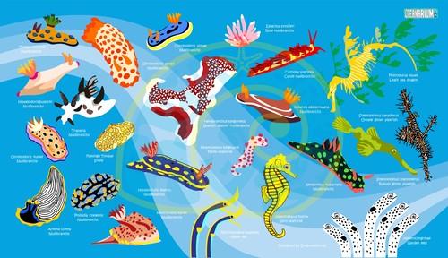 海の生物マイクロファイバータオル/ウミウシ