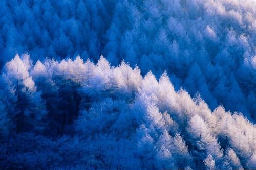 霧氷(高ボッチ高原)