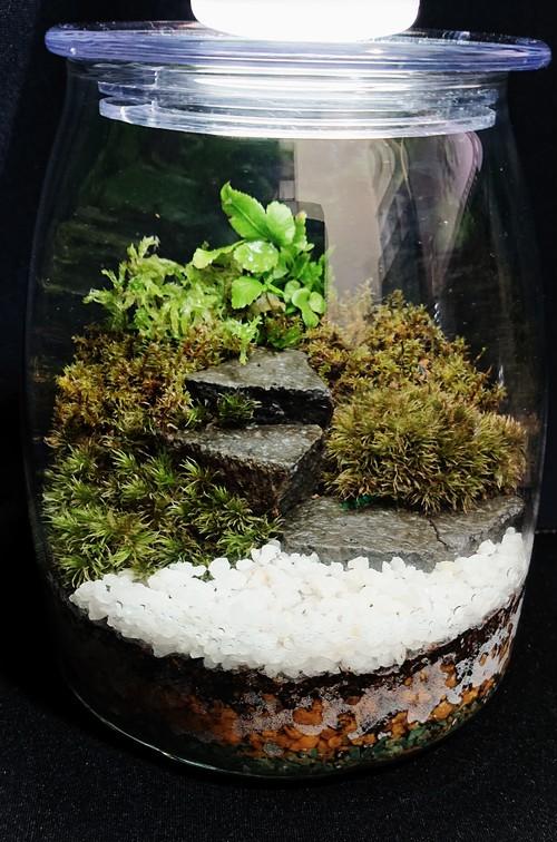 苔ボトル Kokebottle Moss bottle ライト付きセット 011