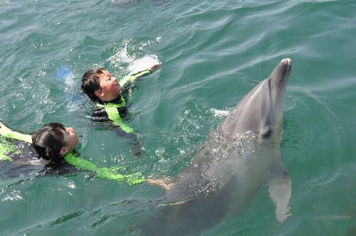 【地元のおすすめスポット】イルカと遊ぶ!「サポーターズチケット」【限定販売】日本ドルフィンセンターの商品画像5