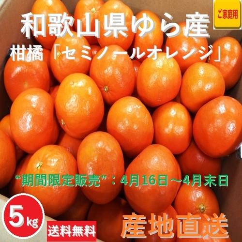 【早期予約受付中】和歌山県由良町産 柑橘 セミノールオレンジ【ご家庭用】サイズ混合 5kg /箱【期間限定販売:4月16日~4月末日】【送料無料】
