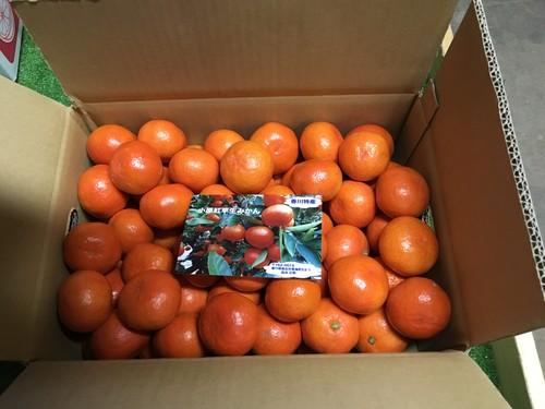 小原紅早生みかん 2Sサイズ 3箱