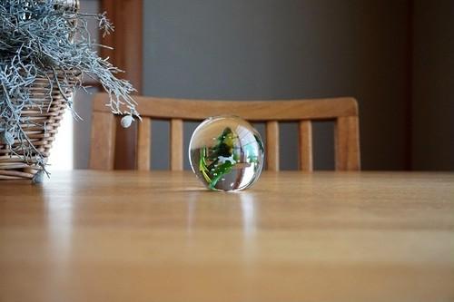 ガラス/ペーパーウェイト/もみの木と動物たち/犬/空西あかね